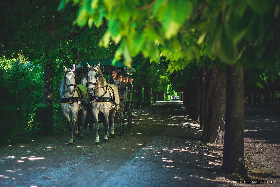 vienna Schönbrunn horses